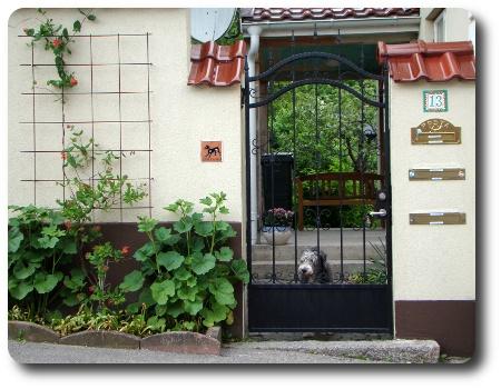 Bild från Karlshamn, med hund