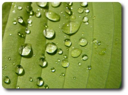 vattendroppar på blad