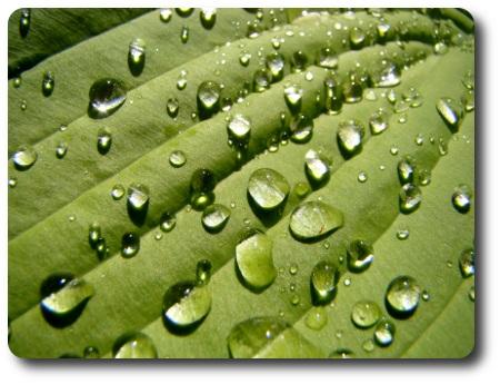 vattendroppar4.jpg