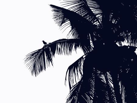Palm i svartvitt