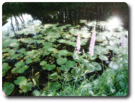 Blommorna och ån. Vilken version av bilderna tycker du är bäst ... 8824a86f44316