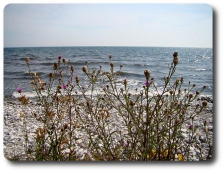 skånsk strand