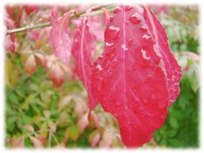 Fotot med dämpade färger