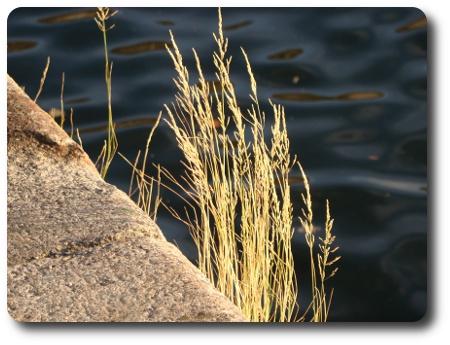 gräs och hav i Karlshamn
