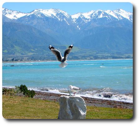 Även en mås är ju där när den flyger. (Bild från Nya Zeeland.)