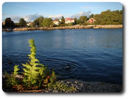 ormbunke och hav i Karlshamn