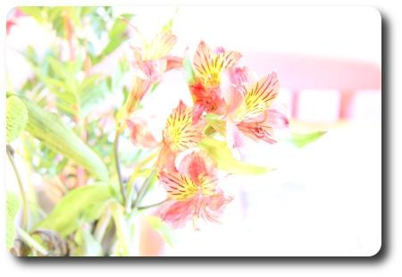 överexponerade blommor
