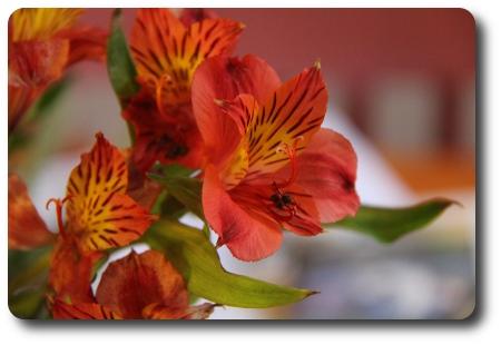 normalexponerade blommor