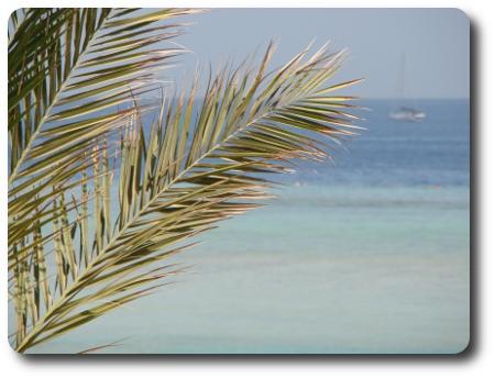 palmblad1.jpg