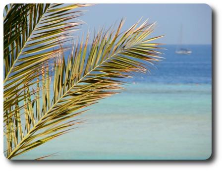 palmblad2.jpg