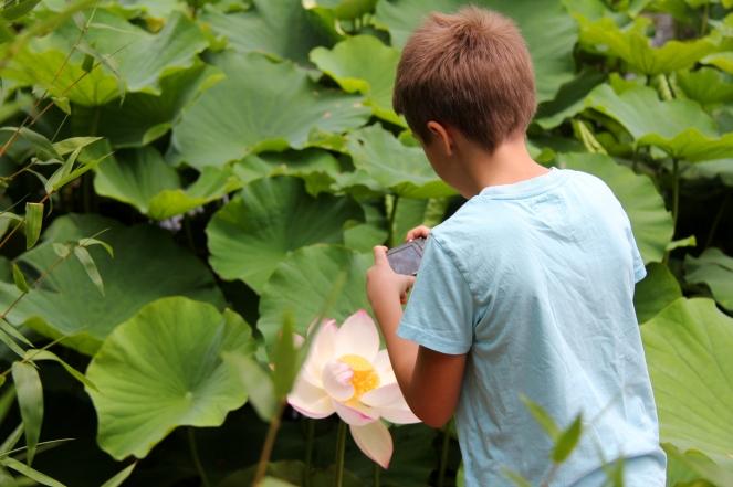 Fotograferar lotusblomma