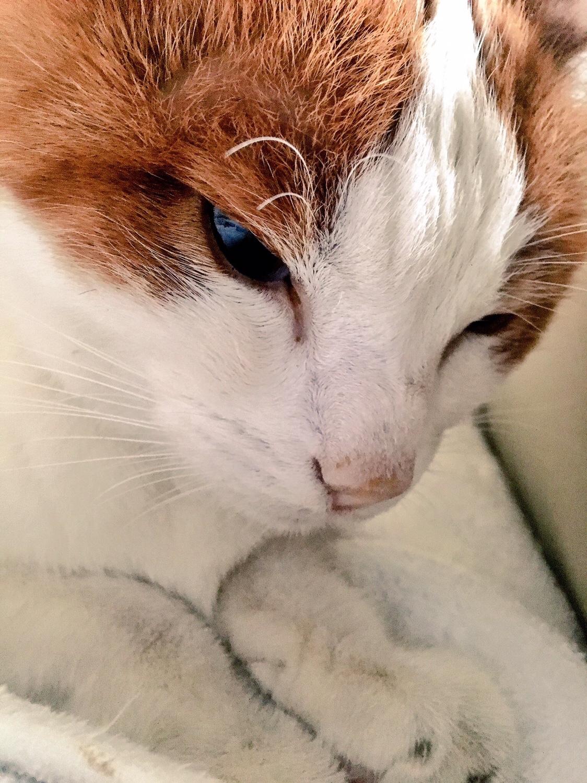 kattens ögon rinner